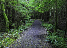 Trees tunnel. At oregon coast so green and beautiful place to visit Stock Photos