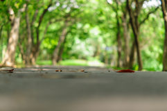 Trees tunnel Stock Photography