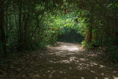 Trees tunnel with bright spot in forest. Trees tunnel with bright spot in deep forest Stock Images