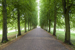 Trees Tunnel Cambridge England. A green tunnel made out of trees Stock Photography