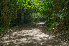 Trees tunnel and dirt road in forest. Green trees tunnel and dirt road in the forest Stock Photography