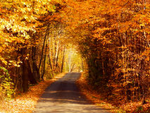 Trees tunnel and road. Color photography of autumn trees tunnel and pathway Stock Photo