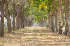 Trees tunnel. Selective focus to trees tunnel in the park Stock Photo