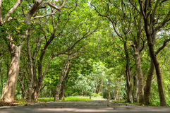 Trees tunnel Royalty Free Stock Images