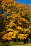 Trees Turning Color in the Fall Season on a Sunny Day. Trees along the woodline of a park turning color during the fall season on a sunny day stock photography