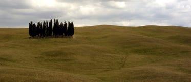 trees tuscan Fotografering för Bildbyråer