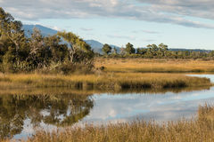 Trees and tussock growing alongside Orowaiti lagoon Royalty Free Stock Photography