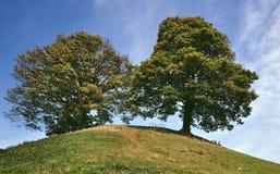 trees två Arkivbild