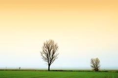 trees två Royaltyfria Foton