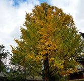 Trees with the typical autumn colors, China stock photos
