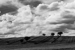Trees under big sky. Some trees and empty vineyards on a side of a hill, beneath a huge sky with big white clouds Royalty Free Stock Image