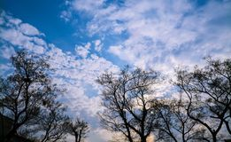 Trees under blue and cloudy sky. Trees are under the blue cloudy sky with sunset Royalty Free Stock Images