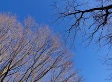 Trees under the blue sky Royalty Free Stock Photos