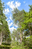 Trees under the blue sky Royalty Free Stock Images