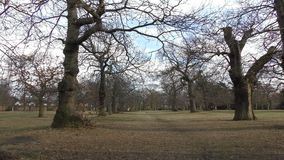 Trees under the blue sky. London. England. United Kingdom.  Beautiful places of city parks stock video footage