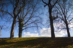 Trees under blue sky. Mysterious, scary, terrifying awesome bald autumn trees under blue sky Stock Photo