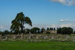 Trees under clear blue skies in an ancient city ruins. Paestum, Campania, Italy Stock Photos
