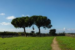 Trees under clear blue skies in an ancient city ruins. Paestum, Campania, Italy Stock Photography