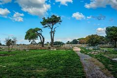 Trees under clear blue skies in an ancient city ruins. Of Paestum Italy Royalty Free Stock Image