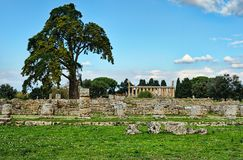 Trees under clear blue skies in an ancient city ruins. Of Paestum Italy Royalty Free Stock Photo