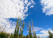 Trees under deep blue sky in mountain Stock Photography