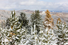 Trees under the first snow Royalty Free Stock Images