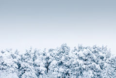 Trees under heavy snow Stock Image
