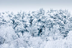 Trees under heavy snow stock images