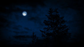 Trees Under Moon On Windy Night stock footage