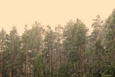 Trees under a pouring rain Stock Photography