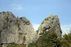 Trees under rocks. Arkivfoton