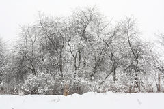 Trees under the snow Royalty Free Stock Photo