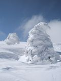 Trees under the snow royalty free stock photography