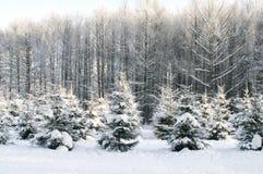 Trees under snow. In winter park Stock Photos