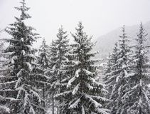 Trees under the snow. In an Italian winter royalty free stock image