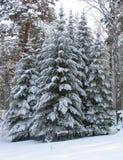 Trees under the snow Stock Photo