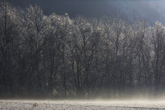 Trees under the snow in a cold plain. Some naked trees covered with snow stand in the background while the snow flies carried by the wind stock photo