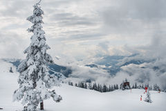 Trees under snow. Fir-tree under snow with cloudy weather in mountain Stock Photography
