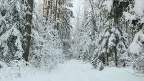 Trees under the snow in forest stock footage