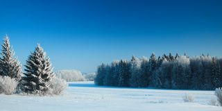Trees under snow in frosty day. Trees under snow in frosty winter day royalty free stock photos