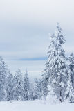 Trees under of snow Stock Image