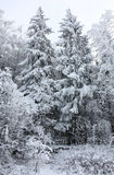 Trees under snow. Royalty Free Stock Images