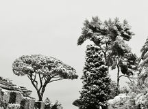 Trees under snow in winter. Panorama of trees under snow in winter Royalty Free Stock Images