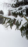 Trees under snow in winter. Trees with snow in winter Royalty Free Stock Images