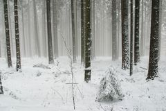 Trees under snow. Winter landscape trees under snow Royalty Free Stock Photos