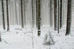 Trees under snow Royalty Free Stock Photos
