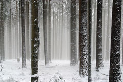 Trees under snow Stock Photography