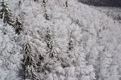 Trees under snow Stock Images