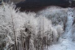 Trees under snow Royalty Free Stock Photo