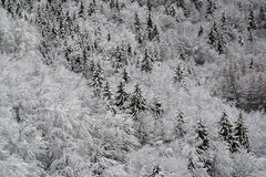 Trees under snow. Winter landscape trees under snow Royalty Free Stock Photo
